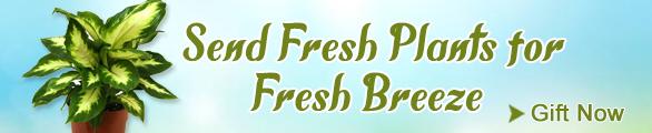 Fresh Plants